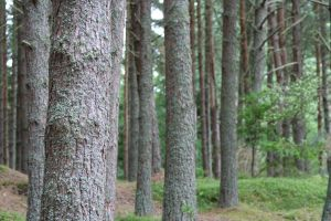 Trees. by Cora-Leigh