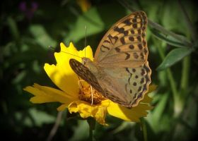 Butterfly on a flower by Vipra-Ur