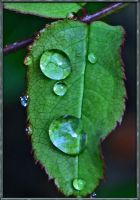 .:Raindrops:. by gin-sui