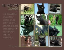 Black Cat Magic Calendar by MPsai