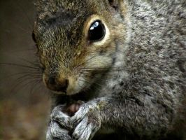 Squirrel I see you by kez245
