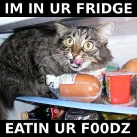 cat in fridge by jtc420955