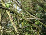Parrots conference by Momotte2