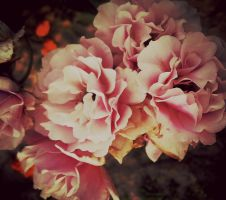 Its All Rosy by vi0let0nwhite