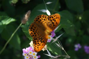 Butterfly at Corfu by picture-melanie