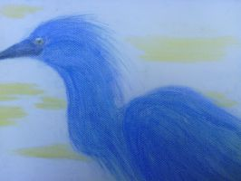Little Blue Heron colored by sharktaiIs