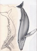 humpbacks through the ages by the-jabber-wocky