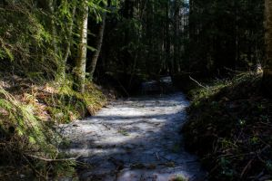 ditch in the woods by purstotahti