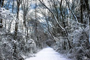 Winterscape by robmurdock