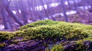 Tiny Plants by Alex-the-Ander
