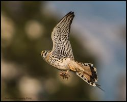 Lunch on the Fly by AirshowDave