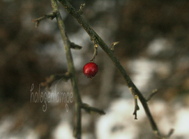 Berry 1 by halogenlampe