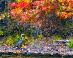 Great Blue Heron Painting by photoman356