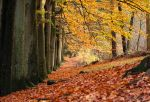Autumn path by forgottenson1