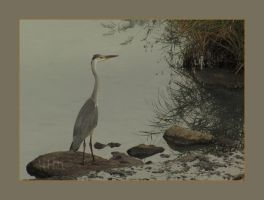 Heron in Northern Japan by x-pyre12