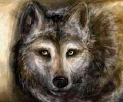 Wolfy. by Sophabelle
