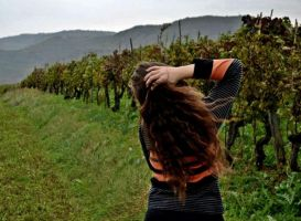 Vineyard. by karlicka