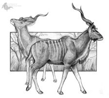 Greater Kudu by Sesroh