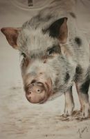 Pig pet portrait by keopsa