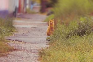 Cat on the road by Kittengrapher