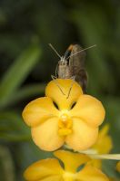 descanso by Insect-Lovers-Club