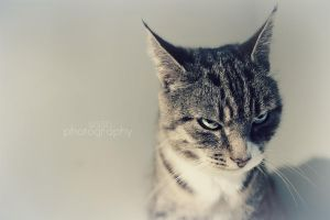 Angry face by sisselPhotography