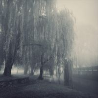 willows by leenik