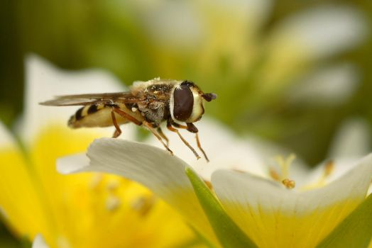 Posing Hover by Alliec
