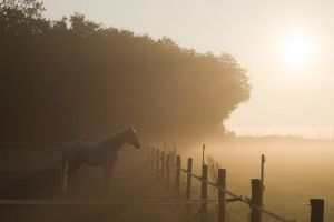 Horse + fog + sunrise by atol