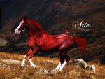 Aries by L-imitless