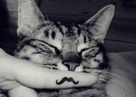 my mustache cat by Simiyo