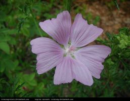 freaksmg-stock-flower 2 by freaksmg-stock