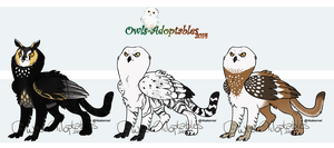 02 Owl Griffins - OPEN by Tawnee-Owl