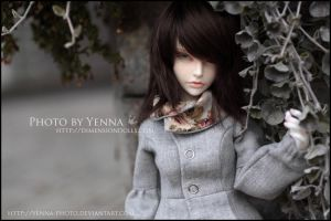 Frosted by yenna-photo
