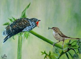 Cuckoo by WendyMitchell