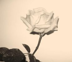 Black and White Rose by dreams-of-dreams