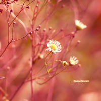 pinkness... by onixa