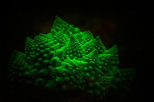 romanesco island by baspunk