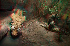 Stereoscopic Tigres by dvreflex