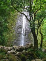 Manoa Waterfall by joeyartist