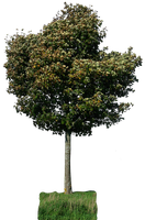 tree 29 png by gd08