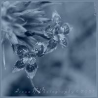 'Dianthus' in blue by WaitingForTheWorms