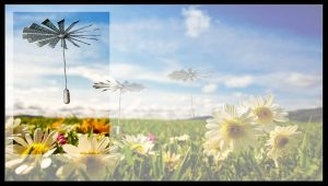 Seeds by FarawayPictures