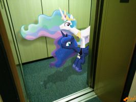 Warning! Trollestia in the Elevator! by OJhat