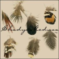 mix-feathers by ShadyMedusa-stock
