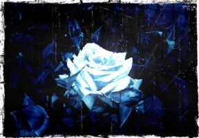 Blue roses by MangaMinecraft