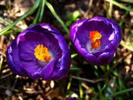 Signs of Spring by zhaleh
