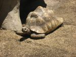 Tortoise_9640 by vamphawkehphotos