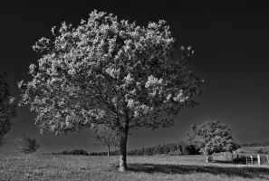 Tree in infrared by LiveInPix