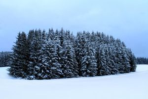 winter in Black Forest by hv1234